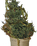 Photo of Christmas tree in trash can