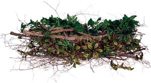 Photo of branches ready to be recycled